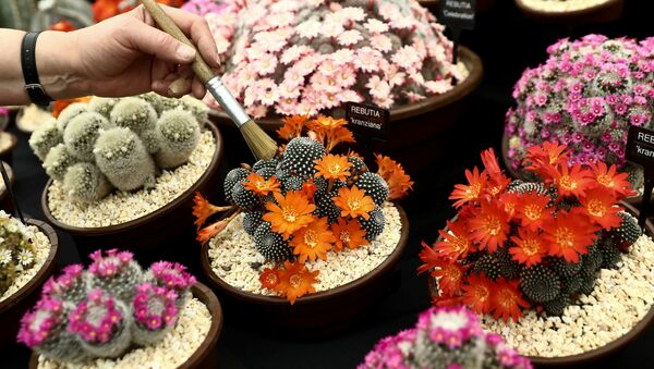 Chelsea Flower Show - Цветочное шоу Челси - Sputnik Узбекистан