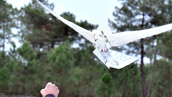 Дрон в виде птицы - Sputnik Узбекистан