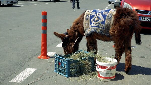 Скотина и туристы: ослик из Мцхета стал туристической достопримечательностью - Sputnik Узбекистан