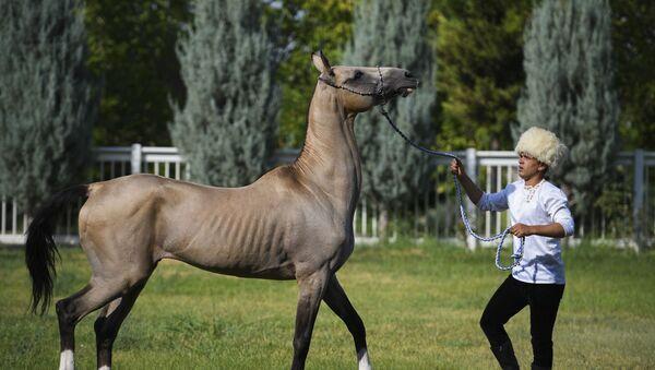 Конь ахалтекинской породы - Sputnik Ўзбекистон