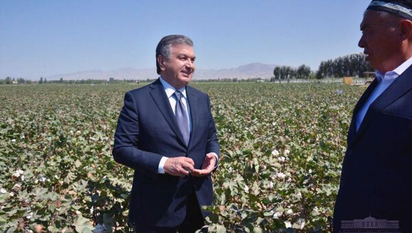 Президент Узбекистана Шавкат Мирзиёев посетил поле фермерского хозяйства Юсупов Гофуржон файз Бекабадского района - Sputnik Ўзбекистон