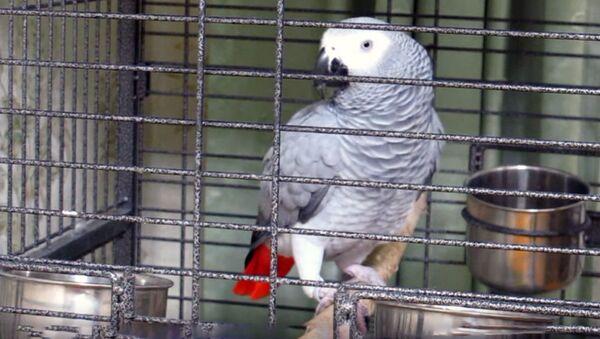 Попугай в клетке - Sputnik Узбекистан