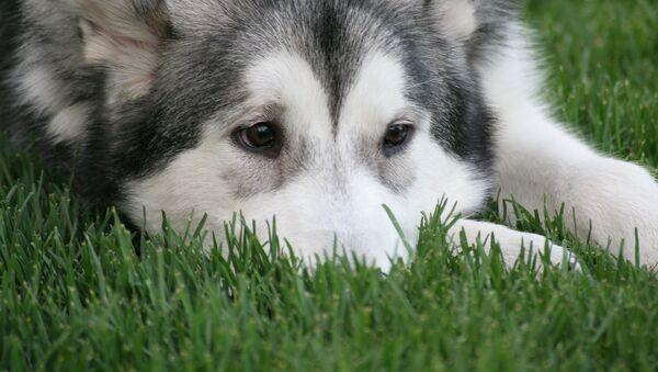 Собака. Иллюстративное фото - Sputnik Ўзбекистон